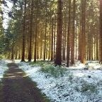A Memory of Witches: Hiking the Harz
